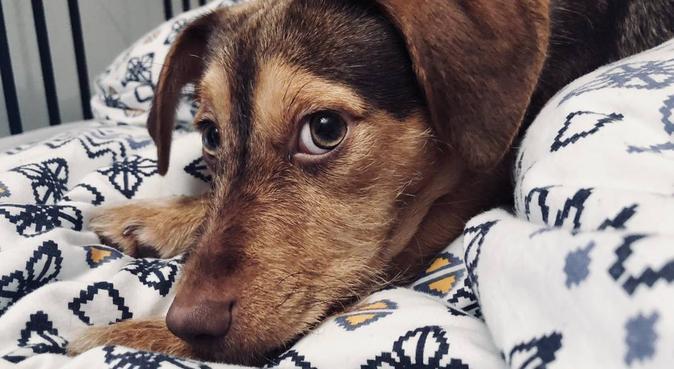 Un tas d'amour pour vos chiens au centre d'Aix, dog sitter à Aix-en-Provence