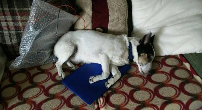 Dog walker and cuddler, dog sitter in York