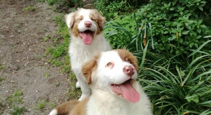 Passeggiando in serenità, dog sitter a VENEZIA