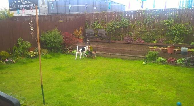 Doggy fun walking and sitting in Hurlet, dog sitter in lanarkshire