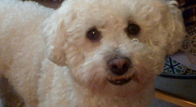 Etudiante véto pour s'occuper de vos animaux!, dog sitter à Maisons-alfort