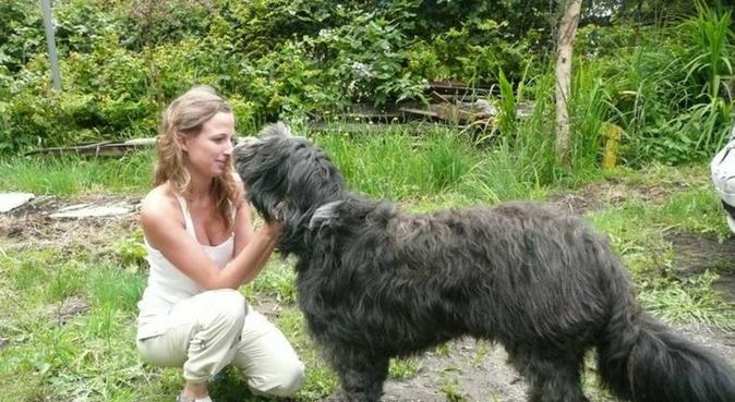 Day care for big  dogs, hundvakt nära Stockholm