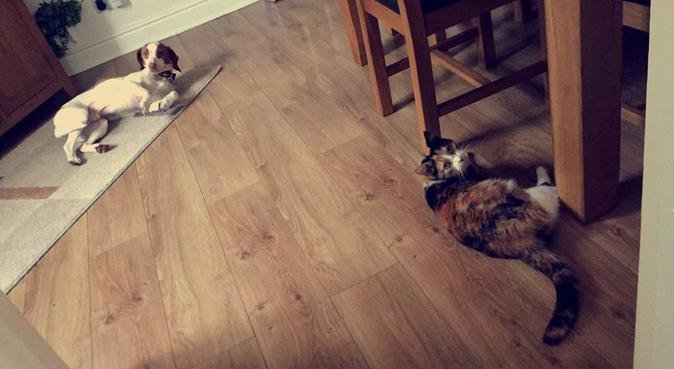 Charlie's Dog Paradise, dog sitter in Cardiff
