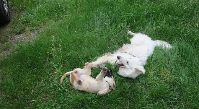 Soins et câlins pour vos animaux, dog sitter à Fegersheim