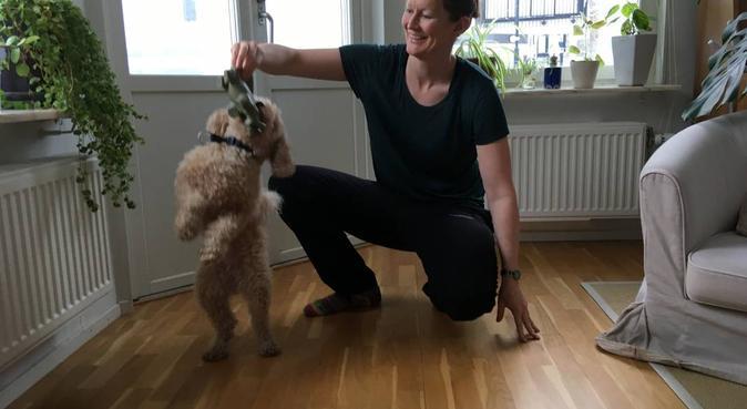 Längtar efter mer hundtid, hundvakt nära Uppsala, Sweden