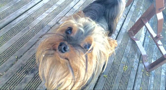 Dogsitter cherche de nouveaux compagnons !, dog sitter à Lille