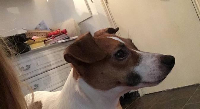 L'amoureuse de nos compagnons, dog sitter à Nice, France