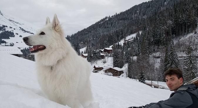 Compagnie pour nos meilleurs amis :D, dog sitter à La Tronche, France