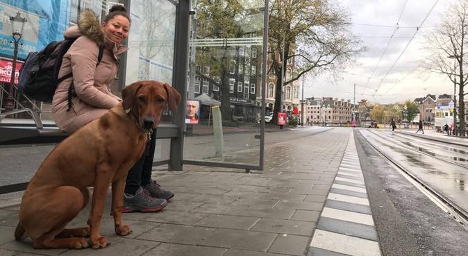 Lange wandelingen & lekker luieren in Breda, hondenoppas in Breda