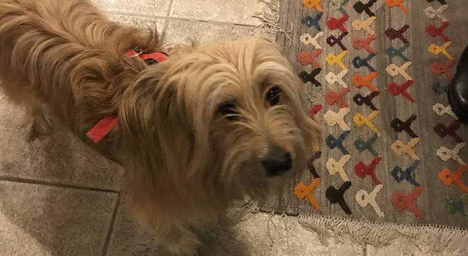Passegiate con il vostro cane, dog sitter a Venezia, VE, Italia