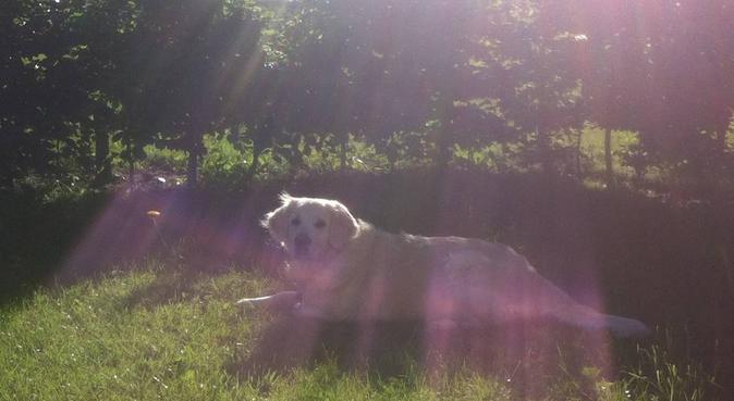 Dog Walking/Running/Cuddling in Falkenberg, hundvakt nära Falkenberg