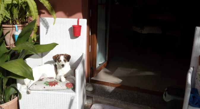 FULLIMMERSION DI COCCOLE/PASSEGGIATE DIVERTENTI♡, dog sitter a Selargius, CA, Italia