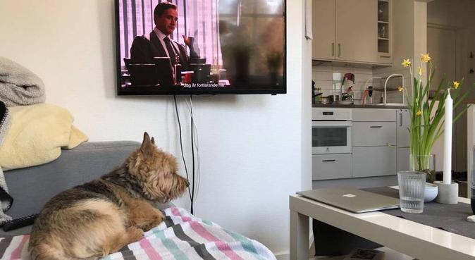 Erfaren och kärleksfull hundpassning i Lund, hundvakt nära Lund