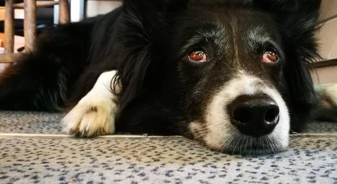 Lunghe passeggiate in compagnia 🐾❤️, dog sitter a Padova