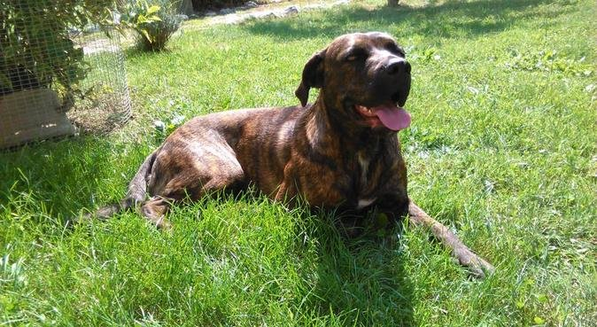 Amante degli animali, dei cani in particolare, dog sitter a Napoli