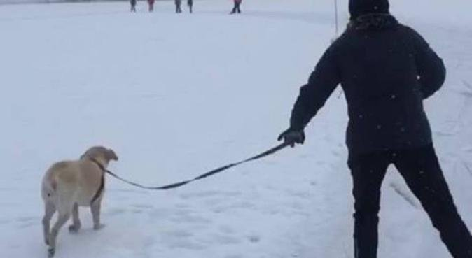 Helgpassning i Bromma, hundvakt nära Stockholm