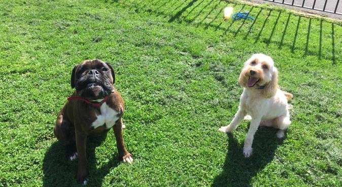 Dog walking for your furry friend, dog sitter in Gloucester, UK