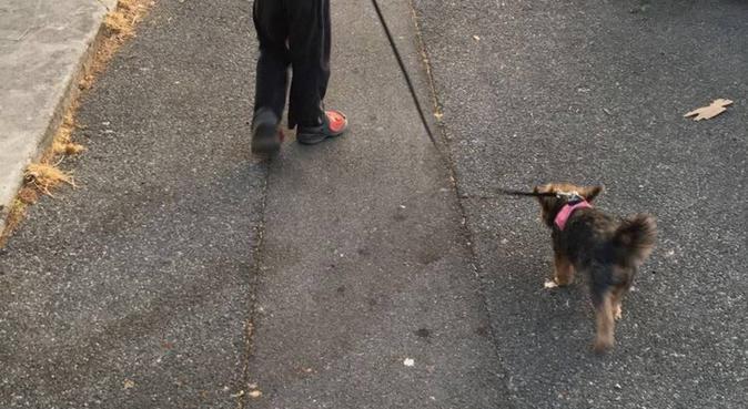 Balades, tendresses, amour sont au rendez-vous, dog sitter à Marseille