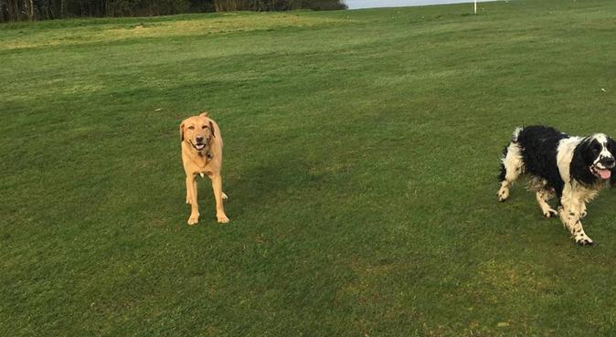 Fun Dog Walks!, dog sitter in Guildford, UK