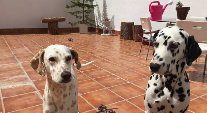 Tiempo con perris mucho mejor, canguro en Rota, España