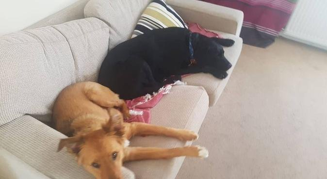 Colchester Dog Walking, dog sitter in Colchester
