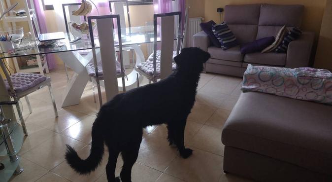 Cuidado de perros, paseos, etc., canguro en Valdemoro