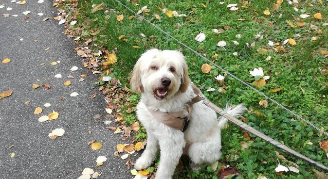 """""""AMORE INCONDIZIONATO PER I NOSTRI PELOSI!, dog sitter a Sorbolo"""