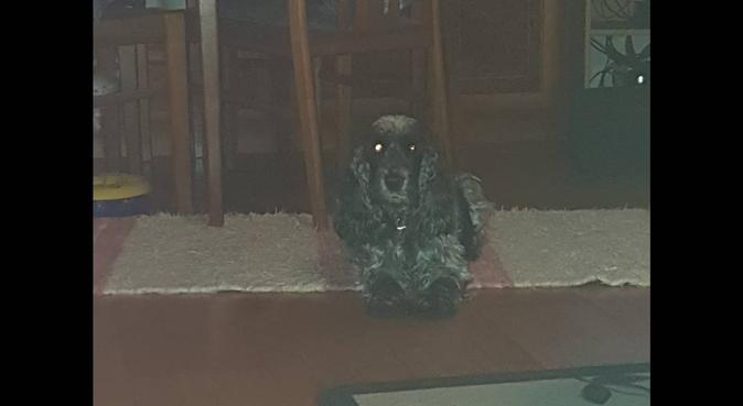 Kärleksfull erfaren hundpassning i växjö, hundvakt nära Växjö