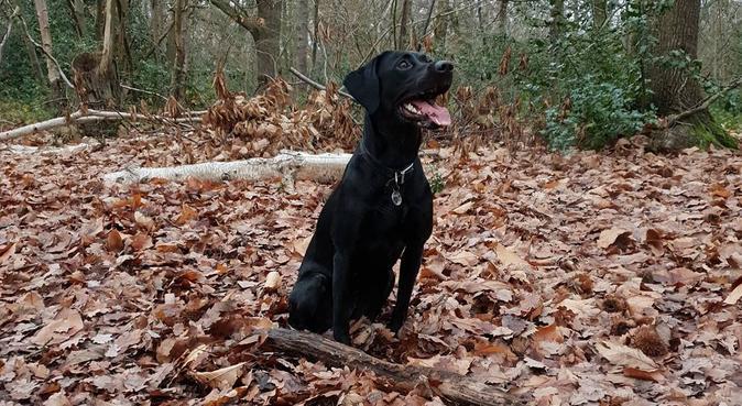 Kazz's furry friends, dog sitter in Southend-on-Sea, UK