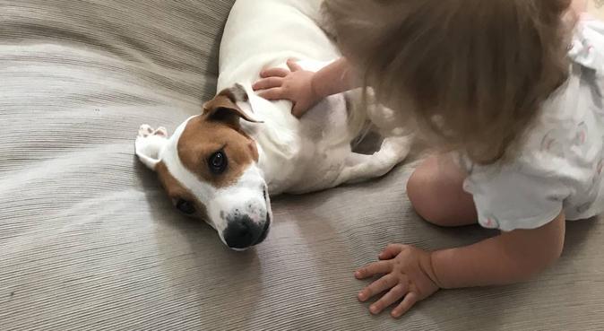 Tout pour les toutous, dog sitter à Croix, France