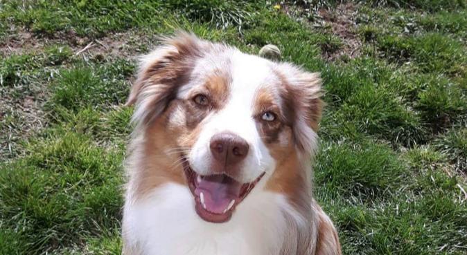 Le meilleur pour vos compagnons !, dog sitter à Ouistreham