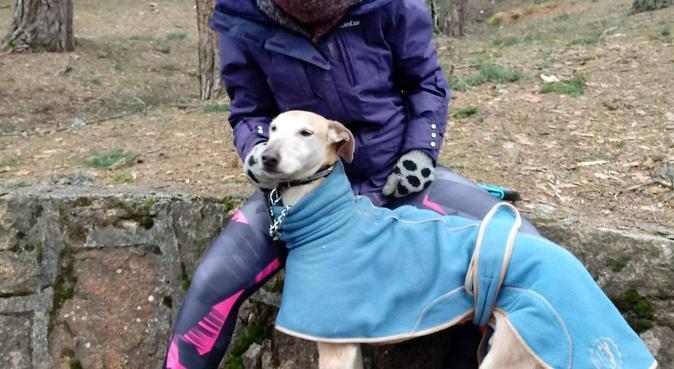 Paseadora canina con larga experiencia, canguro en Móstoles, España