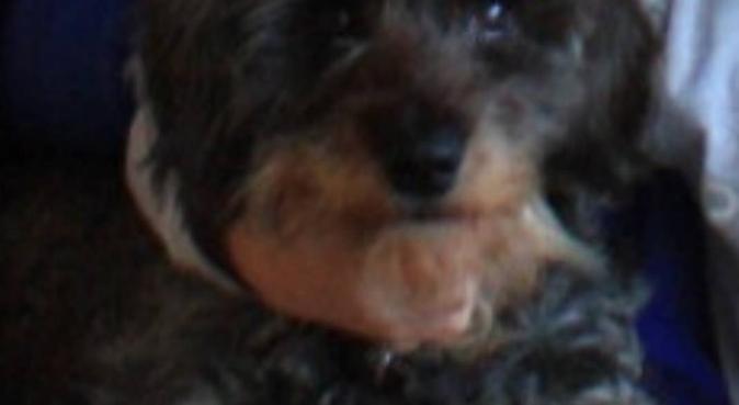 Étudiante/Student/Studentin 🇫🇷,🇬🇧/🇺🇸,🇩🇪, dog sitter à Paris