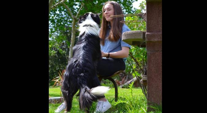 De belles promenades avec vos chiens !, dog sitter à Nantes