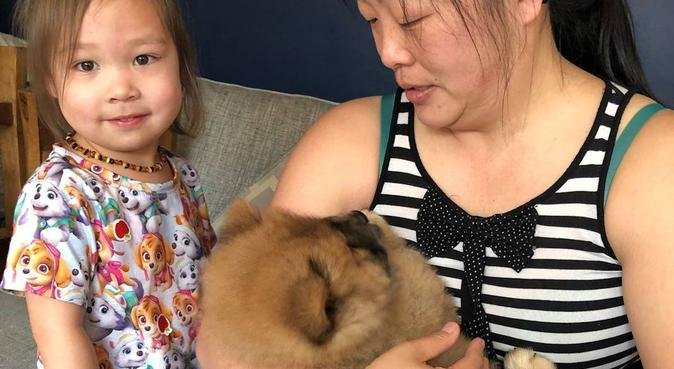 Trustworthy dogsitter with a large garden in Olton, dog sitter in Solihull