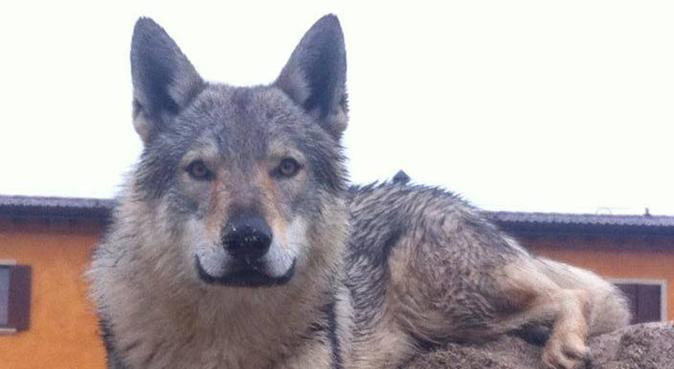 Amicizia e amore per gli amici a quattro zampe, dog sitter a Verona