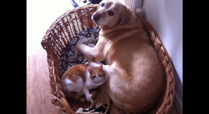 Student Veterinary Nurse offering expert cuddles, canguro en Birmingham