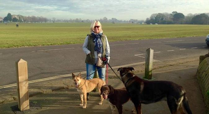 Dog lover in quiet, calm and loving atmosphere, dog sitter in Swinton