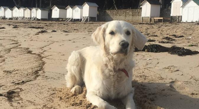 Balade joyeuse assurée, dog sitter à Nantes