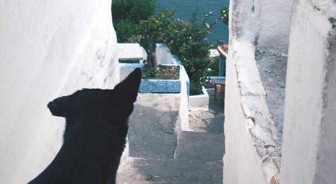 Balades, jeux et câlins à gogo sur Toulouse, dog sitter à Toulouse