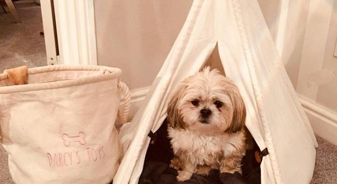 Doggies Delight - a home from home for small dogs, dog sitter in Northampton