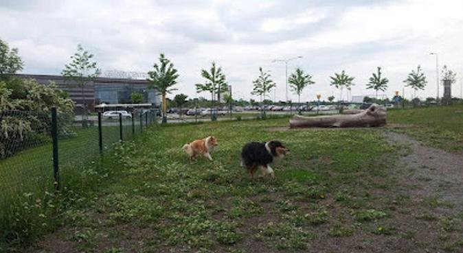 Dog Oasis and Pampering in Uppsala, hundvakt nära Uppsala