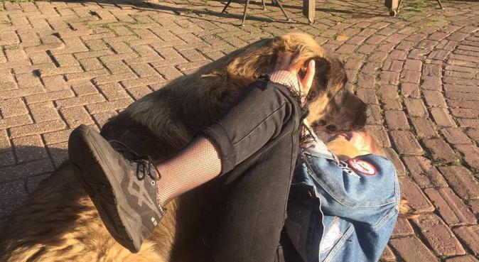Enthousiaste meid die een hond in haar leven mist, hondenoppas in Utrecht