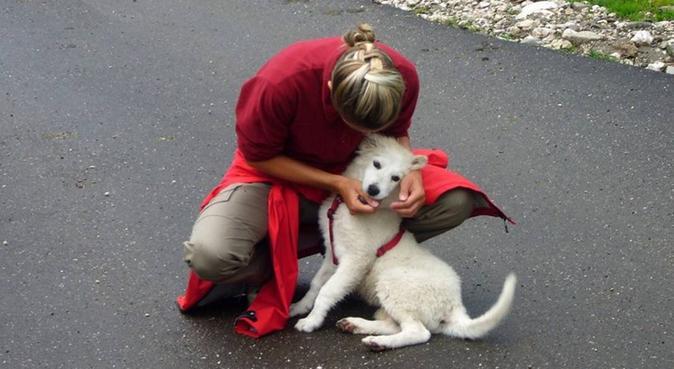 Amante degli animali e dell' aria aperta!, dog sitter a Florence