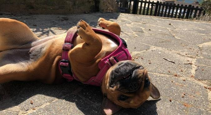 Dog walking in Bournemouth, dog sitter in Bournemouth