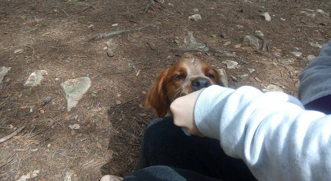 Garde et Promenade de chien., dog sitter à Nice