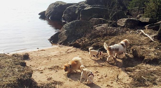Ansvarsfull hundpassning på landet nära sjö, hundvakt nära Hällingsjö