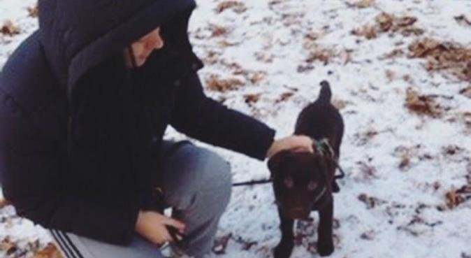 Kärleksfull hundpassning i Hägersten, hundvakt nära Hägersten