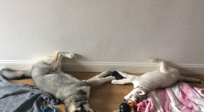 Nion' walk, dog sitter à Annecy
