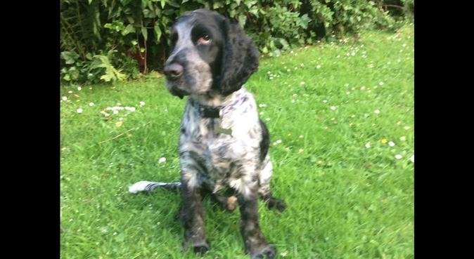 Dog walking in Standish area, dog sitter in Wigan